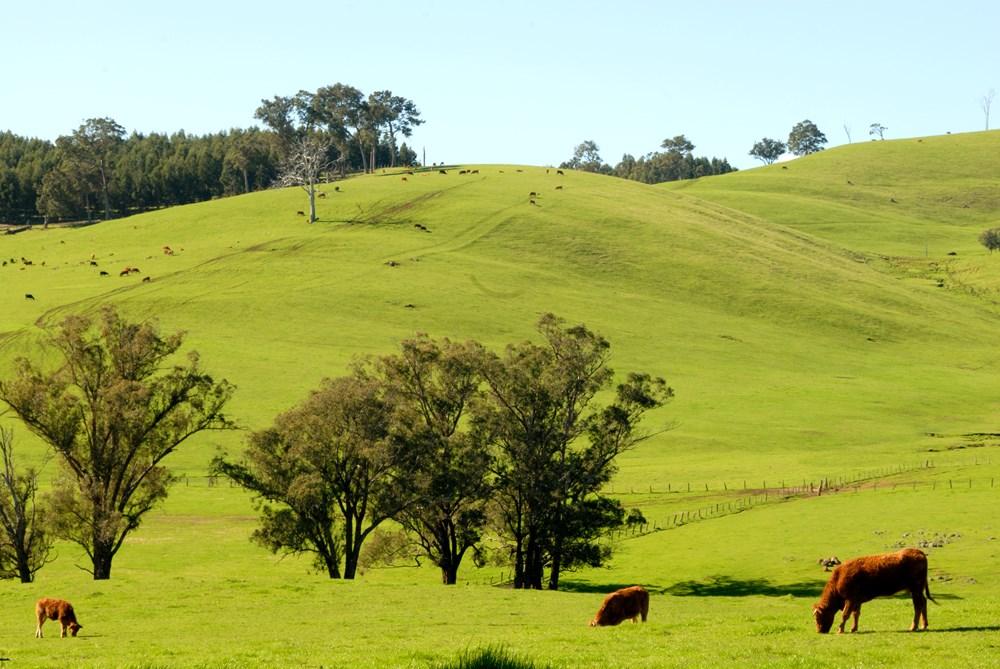 Picture: Rolling Hills